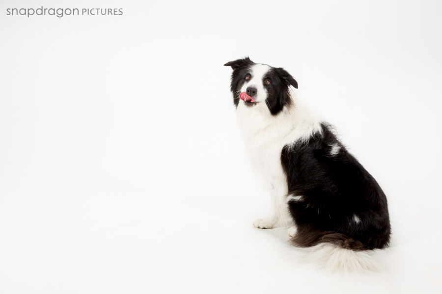 Dog, Dog Photographer, Dog Photography, Dog Portrait, Family Pawtraits, Family Photography, Family Portraits, Fine Art Photography, Johannesburg, Leanne Russell Williams, Pet Pawtrait Photographer, Pet Pawtrait Photography, Pet Photographer, Pet Photography, Snapdragon Pictures, Studio Photographer, Studio Photography