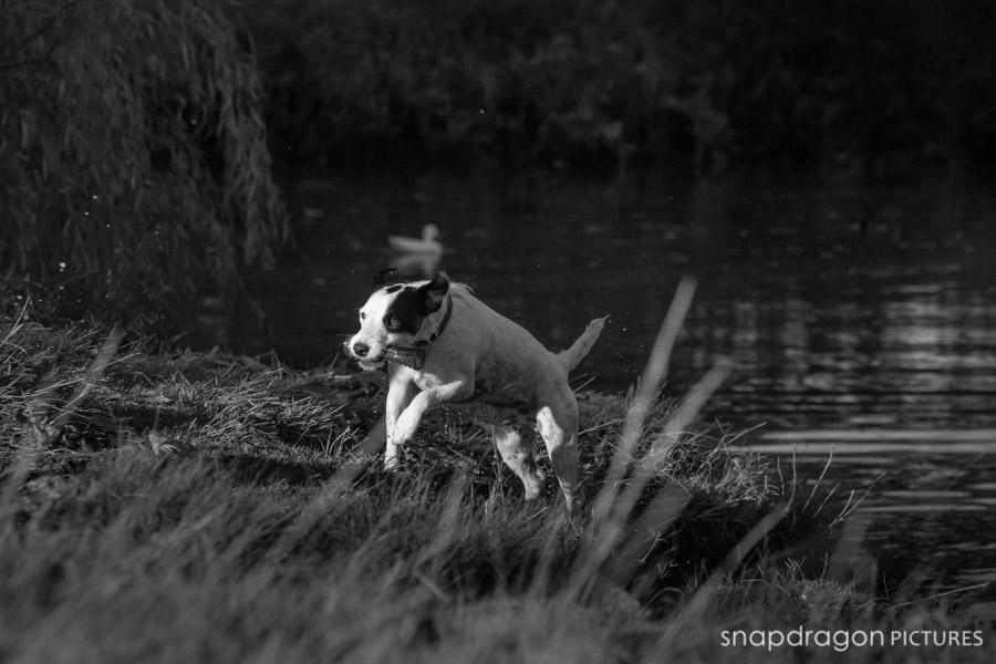 Canine, Delta Park, Dog, Dogs, Family, Fine Art, Gauteng, Johannesburg, Leanne Russell Williams, Lifestyle, Pawtrait, Pawtraits, Pet, Pets, Photographer, Photographers, Photography, Portrait, Portraits, Snapdragon Pictures