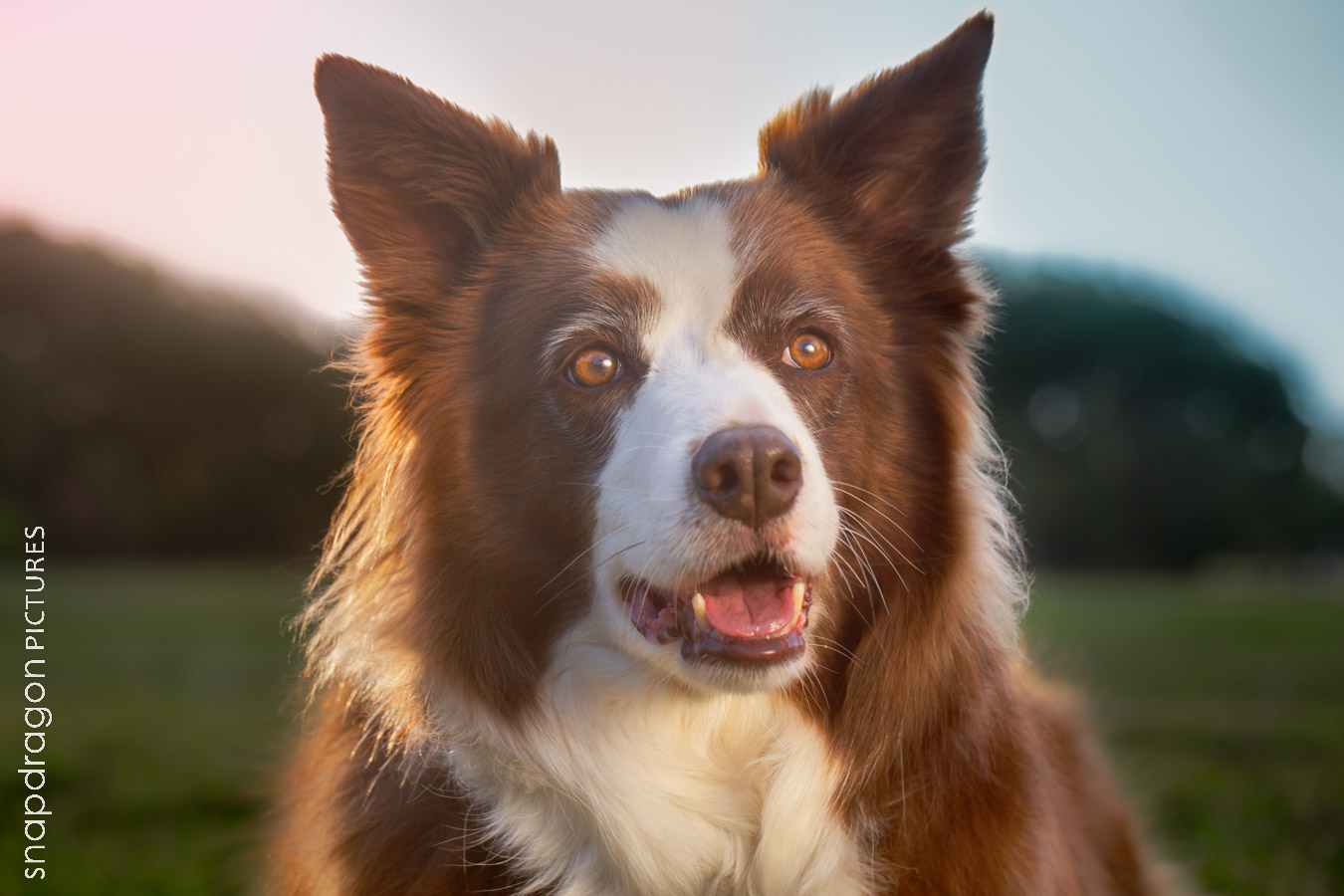 Canine, Couple, Dog, Dogs, Engagement, Family, Fine Art, Johannesburg, Leanne Russell Williams, Lifestyle, Pawtrait, Pawtraits, Pet, Pets, Photographer, Photographers, Photography, Portrait, Portraits, Snapdragon Pictures, South Africa