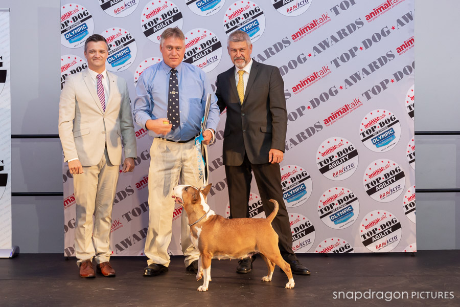 Agility, AnimalTalk, Award, Awards, Bravecto, Breed, Canine, Canines, Dog, Dogs, Event, Events, Function, Functions, Gauteng, Indaba Hotel, Joburg, Johannesburg, Leanne Russell Williams, Olympic, Panorama Media, Photo, Photographer, Photographers, Photography, Photojounralism, Photojournalist, Photos, Sean and Leanne Williams - Snapdragon Pictures, Sean David Wiliams, Snapdragon Pictures, South Africa, Top Dog