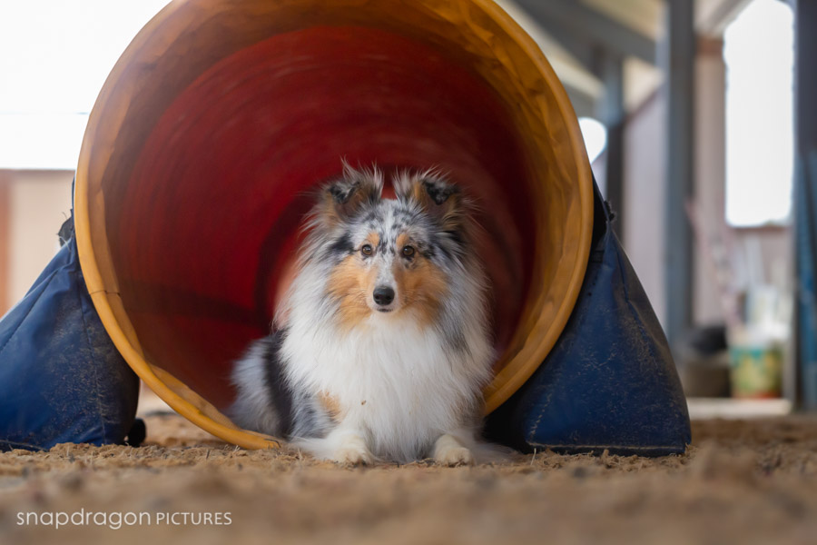 Agility, Animal, Animals, Baby, Business, Candid, Canine, Canine Performance Centre, Child, Children, Company, Corporate, CPC, Documentary, Dog, Dogs, Event, Events, Families, Family, Fine Art, Function, Functions, Gauteng, Johannesgburg, Kids, Lifestyle, Natural Light, Newborn, Pawtrait, Pawtraits, Pet, Pets, Photo, Photographer, Photographers, Photography, Photojournalism, Photojournalist, Photos, Portrait, Portraits, Puppies, Puppy, Snapdragon Pictures, South Africa, Studio, Video, Videographer, Videographers, Videography, Wedding, Weddings*, Weddings. Agibase