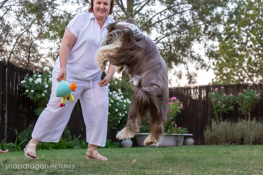 Agility, Animal, Animals, Ashvale Bearded Collies, Baby, Boarding, Business, Candid, Canine, Child, Children, Company, Corporate, Documentary, Dog, Dog Park, Doggy Daycare, Dogs, Eileen Ashton, Event, Events, Families, Family, Fine Art, Function, Functions, Gauteng, Johannesgburg, Kennels, Kids, Lifestyle, Natural Light, Newborn, Pawtrait, Pawtraits, Pet, Pets, Photo, Photographer, Photographers, Photography, Photojournalism, Photojournalist, Photos, Portrait, Portraits, Puppies, Puppy, Shaggy Chic, Snapdragon Pictures, South Africa, Studio, Video, Videographer, Videographers, Videography, Wedding, Weddings