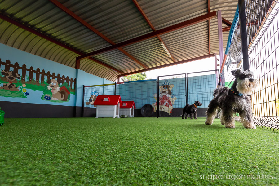 Agility, Animal, Animals, Baby, Boarding Kennels, Business, Candid, Canine, Centurion, Child, Children, Company, Corporate, Daycare, Documentary, Dog, Dog Daycare, Dogs, Event, Events, Families, Family, Fine Art, Function, Functions, Gauteng, Janine Erasmus, Johannesgburg, Kids, Lifestyle, Natural Light, Newborn, Pawtrait, Pawtraits, Pet, Pets, Photo, Photographer, Photographers, Photography, Photojournalism, Photojournalist, Photos, Portrait, Portraits, Puppies, Puppy, Snapdragon Pictures, South Africa, Studio, The Barking Lot, Video, Videographer, Videographers, Videography, Wedding, Weddings