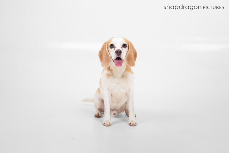 Agility; Animal; Animals; Baby; Business; Candid; Canine; Child; Children; Company; Corporate; Documentary; Dog; Dogs; Event; Events; Families; Family; Fine Art; Function; Functions; Gauteng; Johannesgburg; Kids; Lifestyle; Natural Light; Newborn; Pawtrait; Pawtraits; Pet; Pets; Photo; Photographer; Photographers; Photography; Photojournalism; Photojournalist; Photos; Portrait; Portraits; Puppies; Puppy; Snapdragon Pictures; South Africa; Studio; Video; Videographer; Videographers; Videography; Wedding; Weddings;